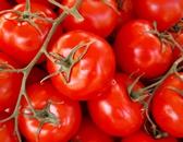 Werder Tomaten